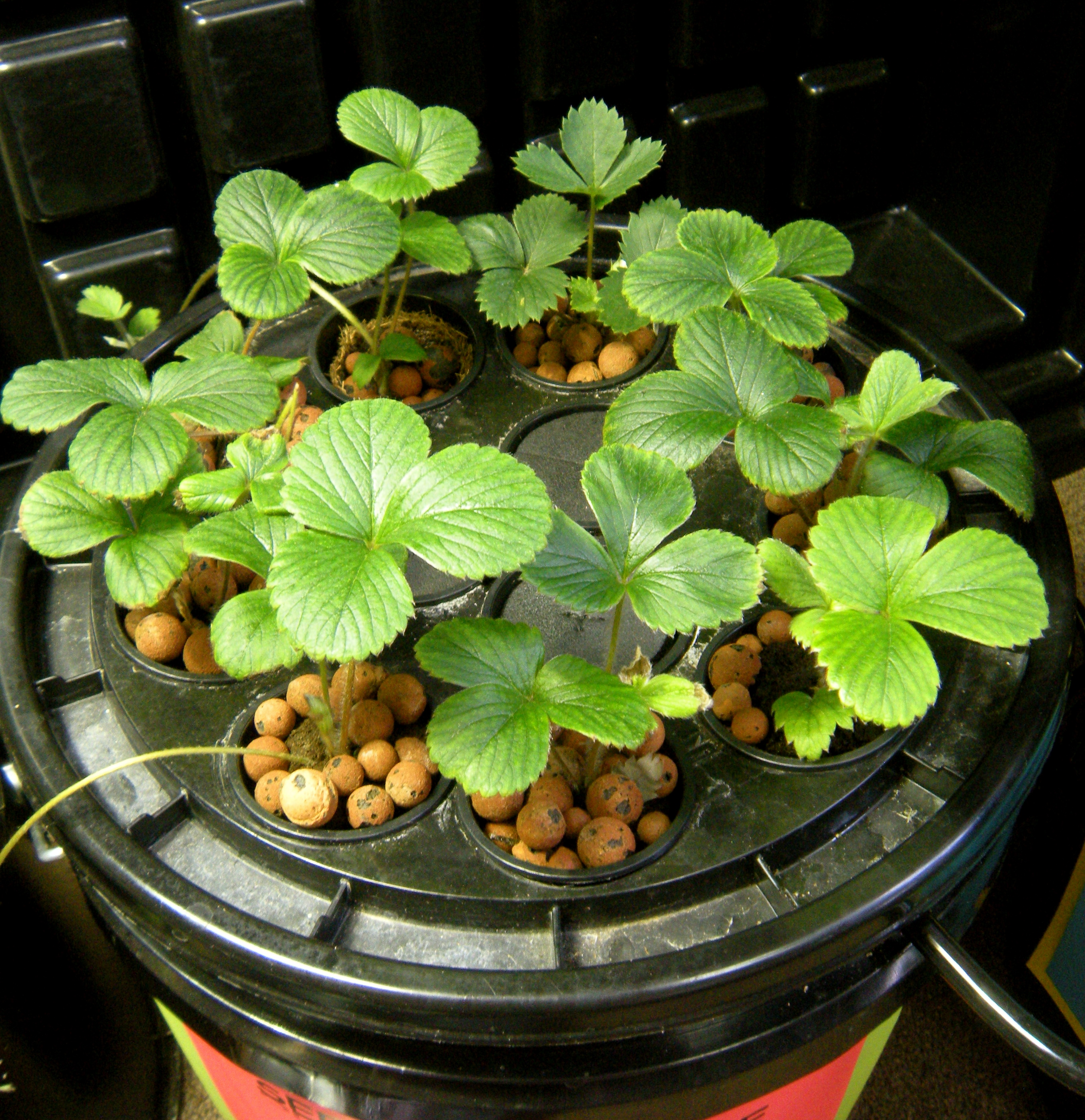 Homemade hydroponic systems for strawberries homemade ftempo for Punch professional home design suite platinum v12
