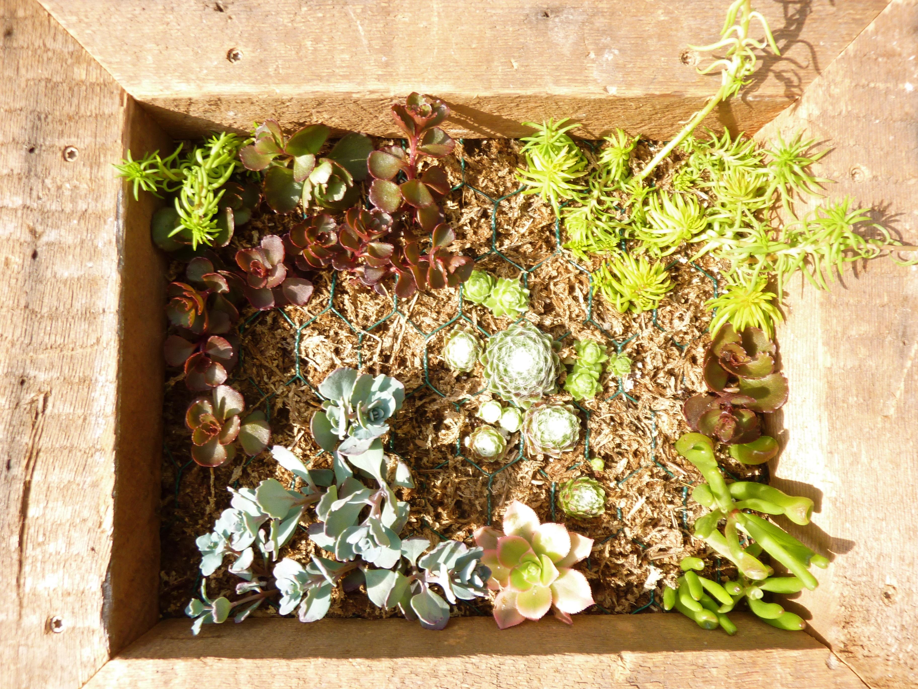 vertical succulent garden | Big Bloom Hydroponics